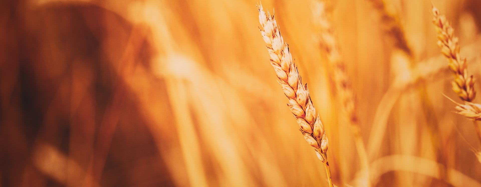 Catalysis Viusid Agro. Cuida, mejora y protege tus cultivos